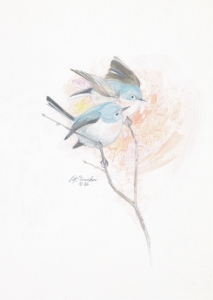BLUE GREY GNATCATCHERS