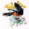 RUFOUS SIDED TOWHEE